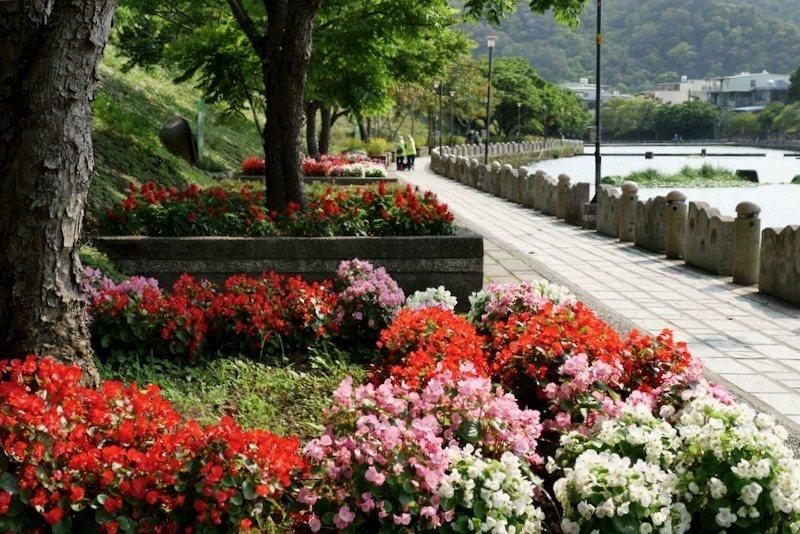河畔旁的親水步道,關西鎮江牛欄河親水公園(含步道)整理得很乾淨有漂亮,春天百花齊開的這時候,每棵大樹根部的小小花圃種有多種色鮮艷的花花草草。