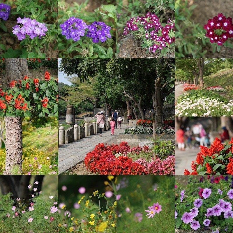 親水步道旁春意盎然,很多的小小花圃,鮮豔幾種顏色的花花草草,美化了步道,走來神清氣爽。