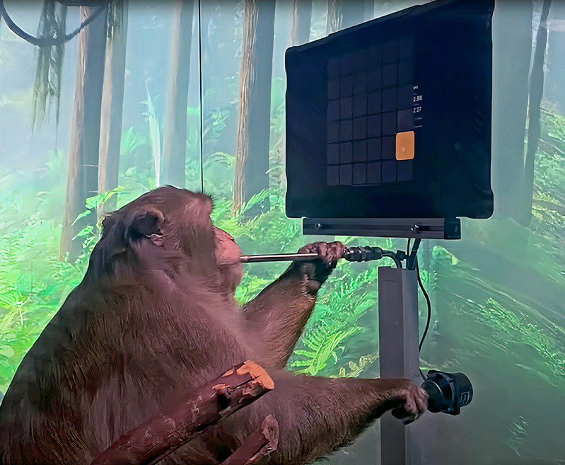 特斯拉執行長馬斯克資助數個充滿未來感的計畫,圖為他旗下腦機介面新創Neuralink的最新成果,展示一隻猴子僅靠「意念」便能打電玩。圖/網路照片