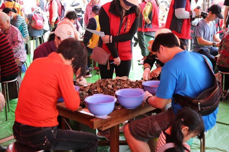 金寧鄉石蚵小麥文化季,此次活動的重頭戲以剝蚵比賽莫屬,圖為去年比賽場景。圖/金寧鄉公所提供