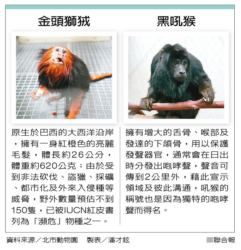 金頭獅狨、黑吼猴 製表/潘才鉉
