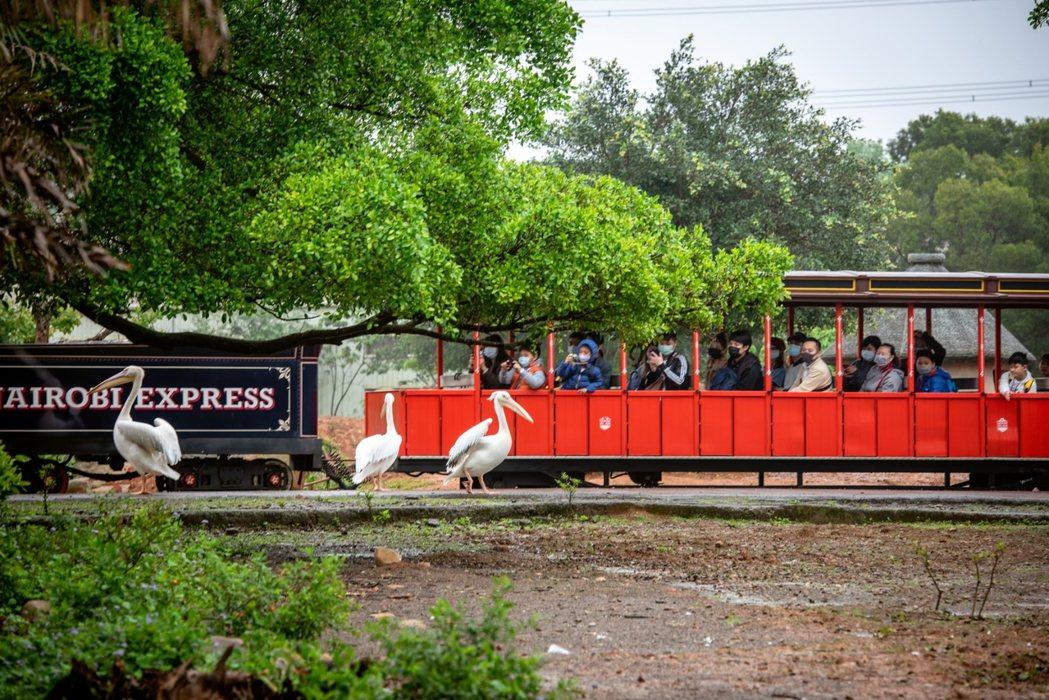 搭乘蒸汽火車遨遊非洲草原區,可近距離看動物,留下難忘體驗。圖/六福村提供