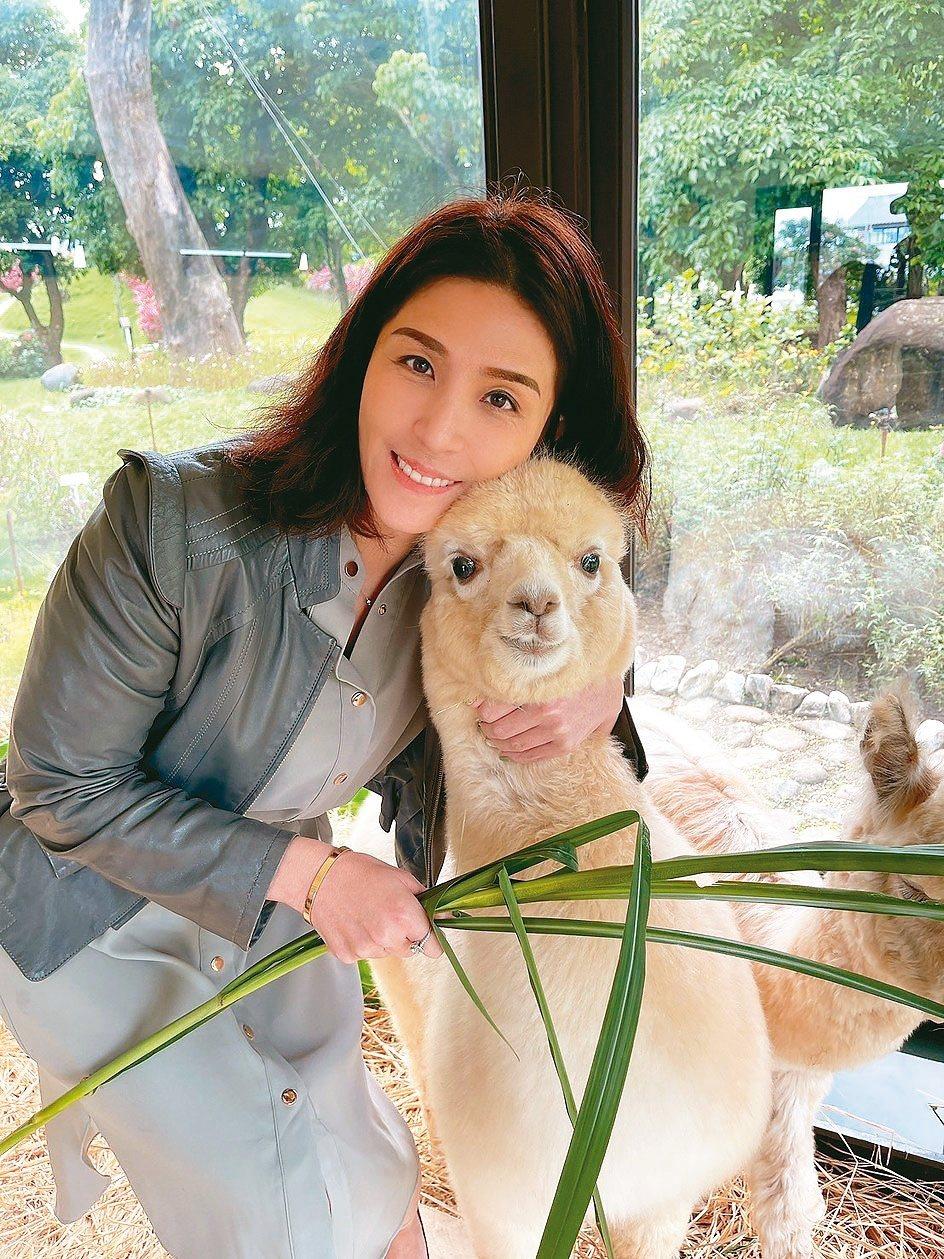 綠舞飯店董事長藍沛晴說,草泥馬「露露」的表情很豐富,討人喜歡。業者/提供