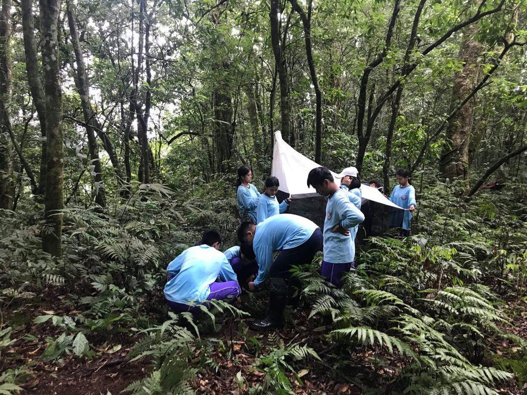 那瑪夏學生在山林中,應用所學架設昆蟲陷阱。 高醫大/提供