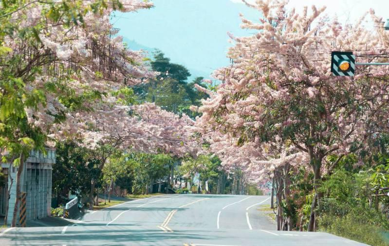 淡粉浪漫的花旗木開滿六龜台27甲公路兩旁,整串粉嫩的花旗木大爆花,美得令人驚嘆。圖翻攝自陳其邁臉書