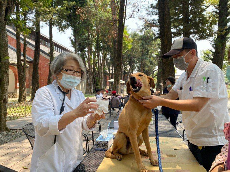 國際寵物日將至,為營造寵物友善旅遊,台南山上花園水道博物館與台南市動保處合作,在園區舉辦寵物登記,寵物健檢及免費預防針注射。圖/山上花園水道博物館提供