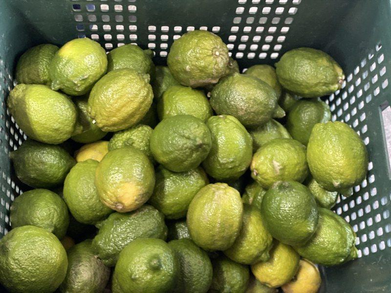 檸檬還未進入盛產季,近期價格起伏大。記者劉星君/攝影