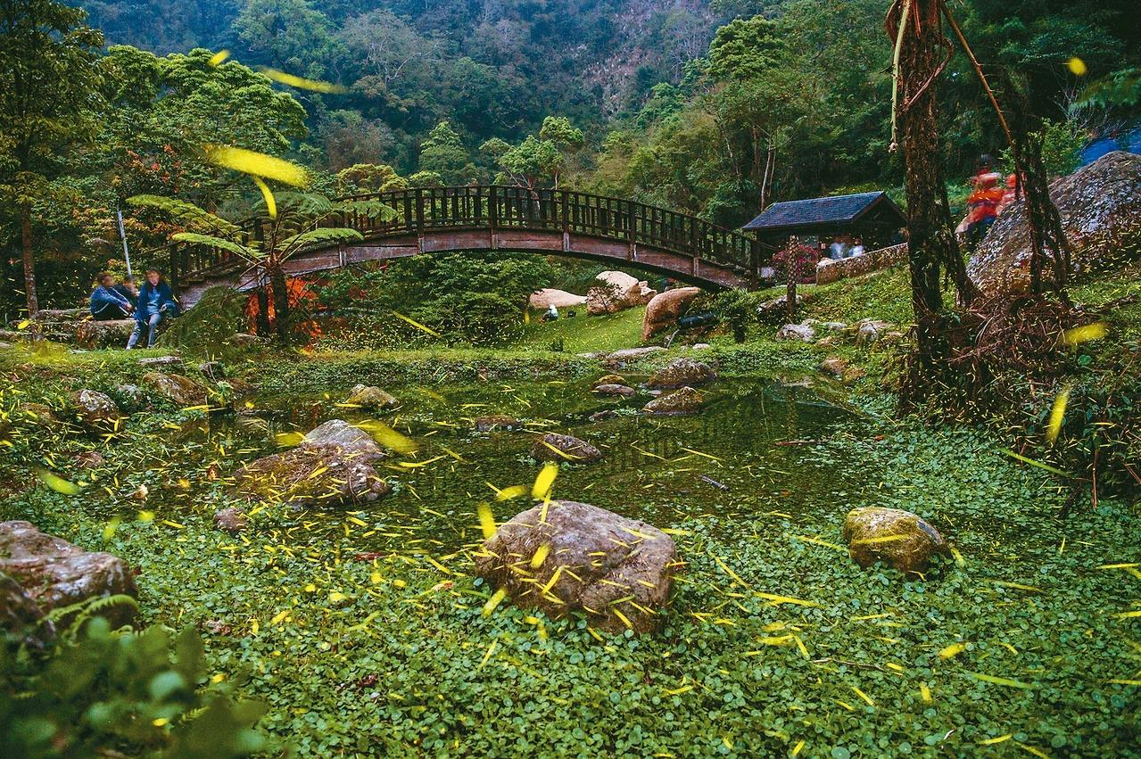 圓潭自然生態園區生態資源豐富,也可預約生態解說。 圖/嘉義縣文化觀光局提供