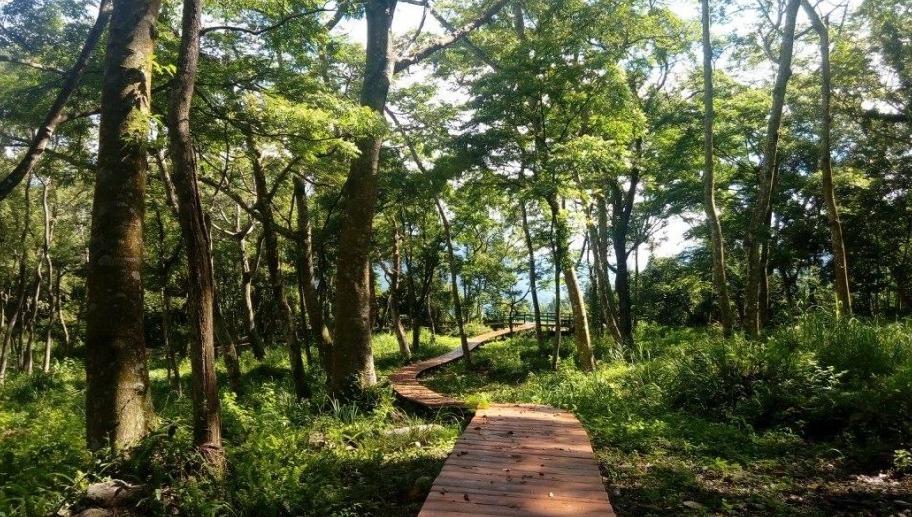 民眾4月到高雄市那瑪夏區,除了賞螢,也可沿台29線抵達充滿芬多精的樟樹林公園。 ...