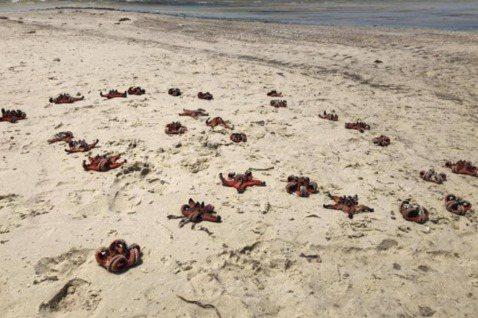 一堆海星橫屍在越南富國島沙灘的照片近日引來眾怒,網友譴責遊客只顧拍「網美照」忽略...