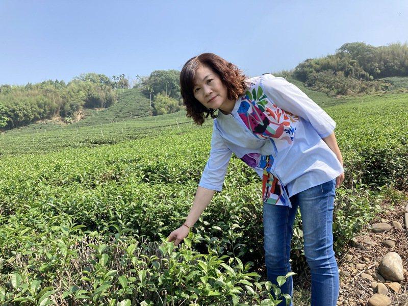 竹山鎮農會總幹事鄭文惠說,竹山茶園缺少灌溉,產量減少了大概有三、四成。記者黑中亮/攝影