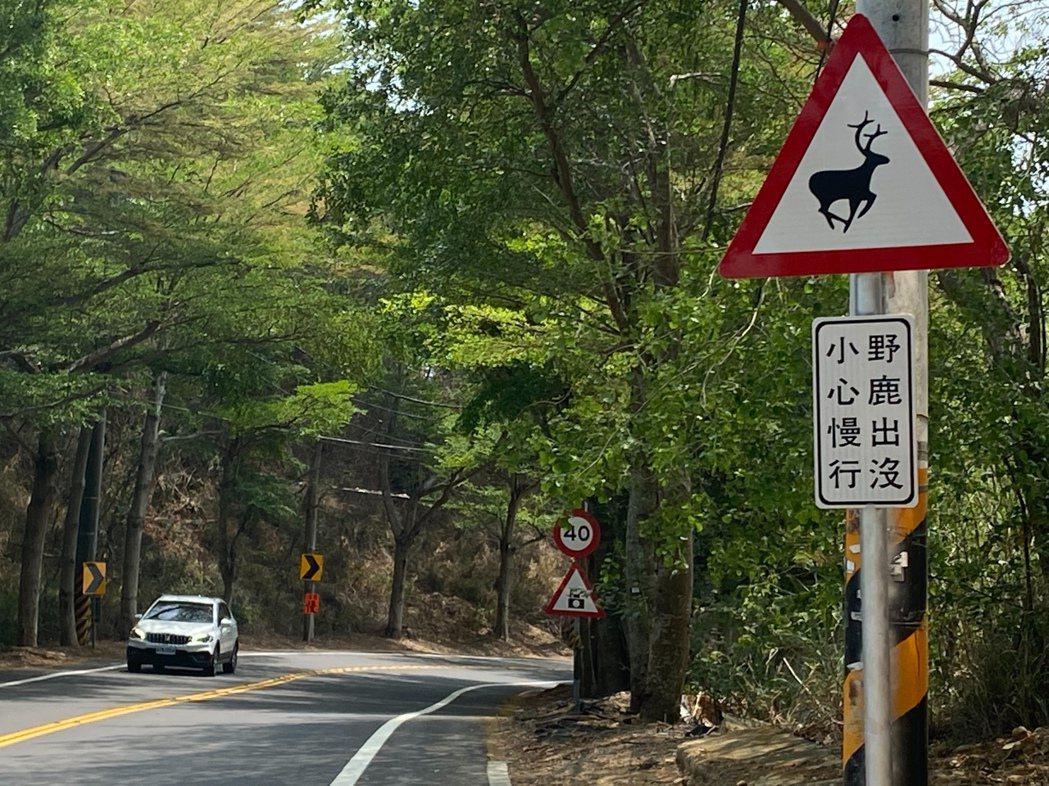 139線出現水鹿蹤跡,為避免危及用路人與水鹿安全,縣府工務處最近在水鹿常出沒路段...