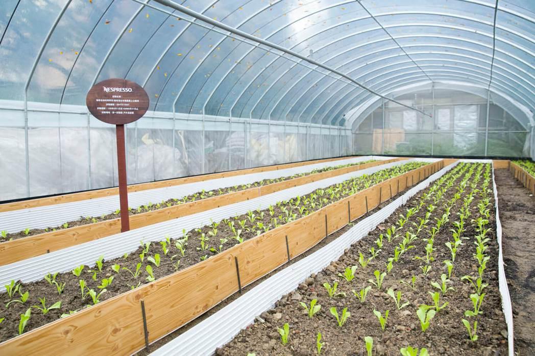 Nespresso正在與臺大合作,以環保咖啡渣用於農作植栽,創造咖啡渣回收的最大...
