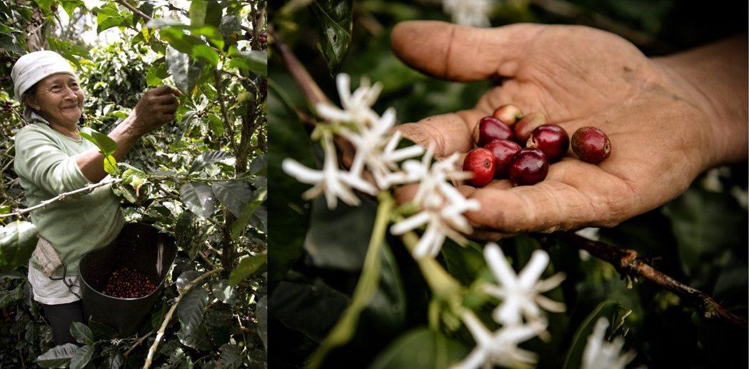 透過咖啡果實,Nespresso團結眾多好友群策群力,為地球友善添增一份心力。圖...