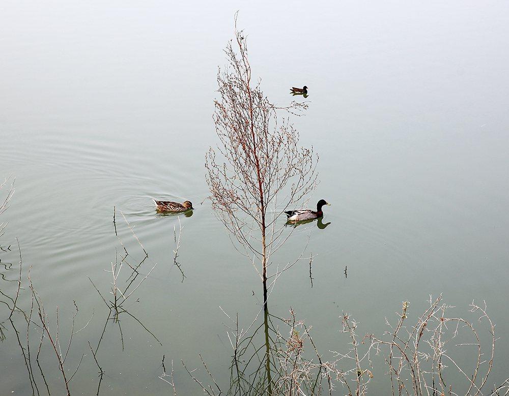 美濃湖水靜謐。 圖/Carter 攝影