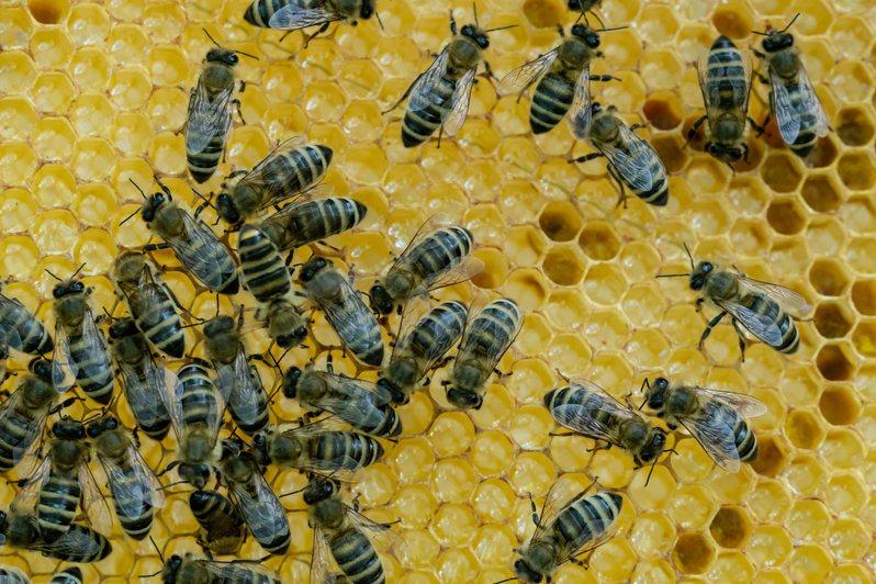 有位網友家住台北市信義區,無意間發現對面鄰居在頂樓養蜂,讓他嘖嘖稱奇。圖為養蜂示意圖。  圖片來源/Ingimage