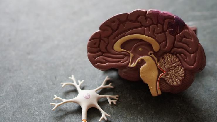 我們的大腦的發育是多用多有用、不用會廢除。 圖/黃軒醫師資料照片