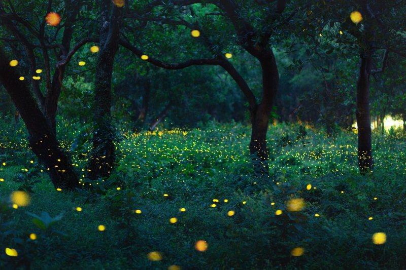 「春令『螢』生態之旅」住房專案將由生態專家帶領大小朋友走入螢光秘境。 業者/提供