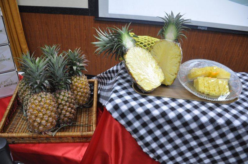 台灣的「金鑽鳳梨」以超高甜度享譽國際市場,每年外銷數量約3萬多公噸,現在金門民眾也吃的到。記者蔡家蓁/攝影