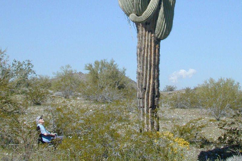 據調查,台積電選的廠址,正是被美國政府列入保育動物沙漠地鼠龜的棲地 ,至於代表美國沙漠重要特色之一的柱狀仙人掌,正是沙漠地鼠龜的食物及庇護所。美聯社