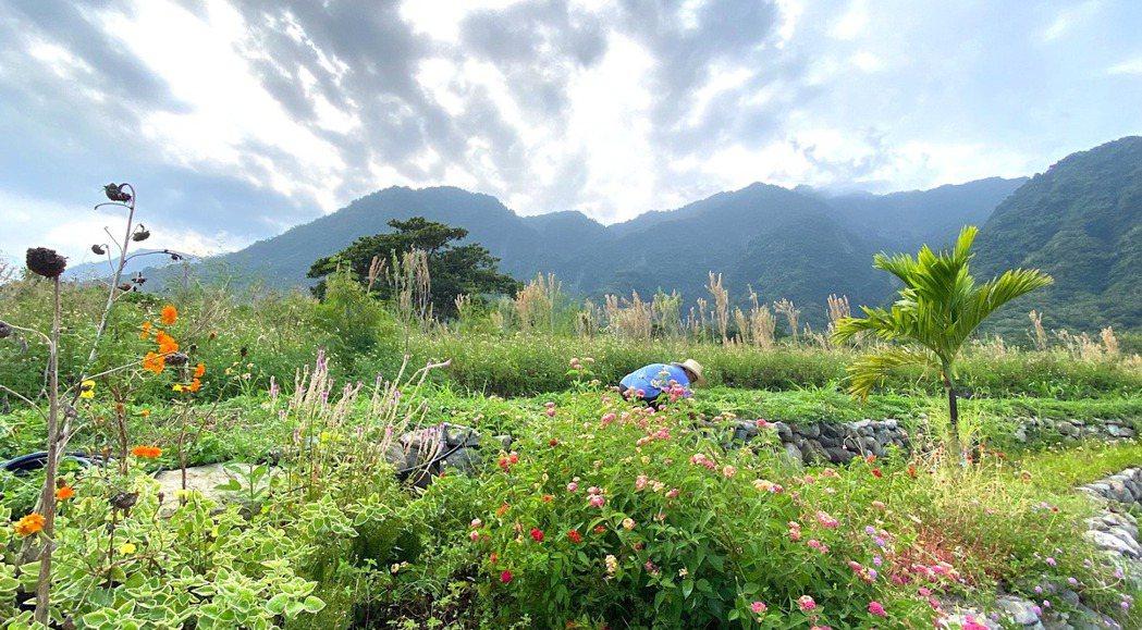 Ming在自己的香草農園。 圖/朱平攝影