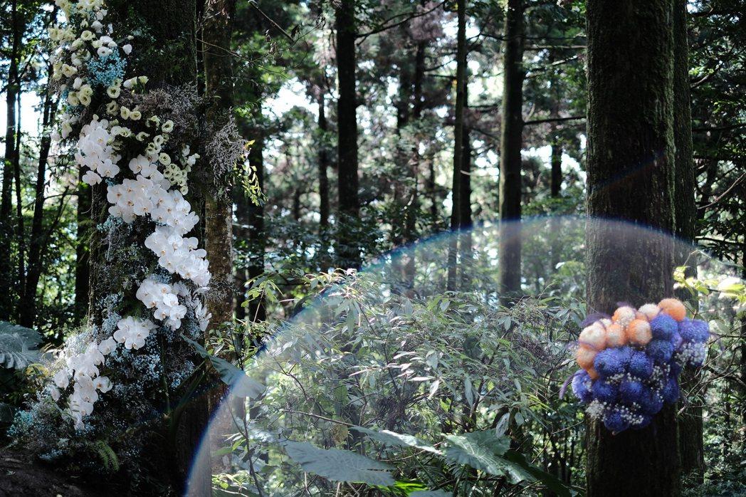 《東眼山森林.回森林家》 圖/溫度物所提供