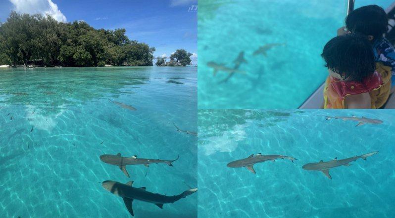 跟鯊魚距離就是這麼近,還會突然出現在身邊。