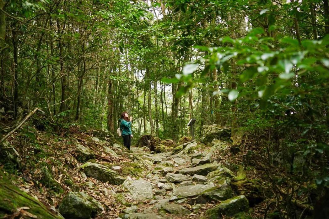 雄獅旅遊獨家推出大雪山全新路線,包括森林療癒x夜探生態、鳥類嚮導帶路等。 圖/雄...