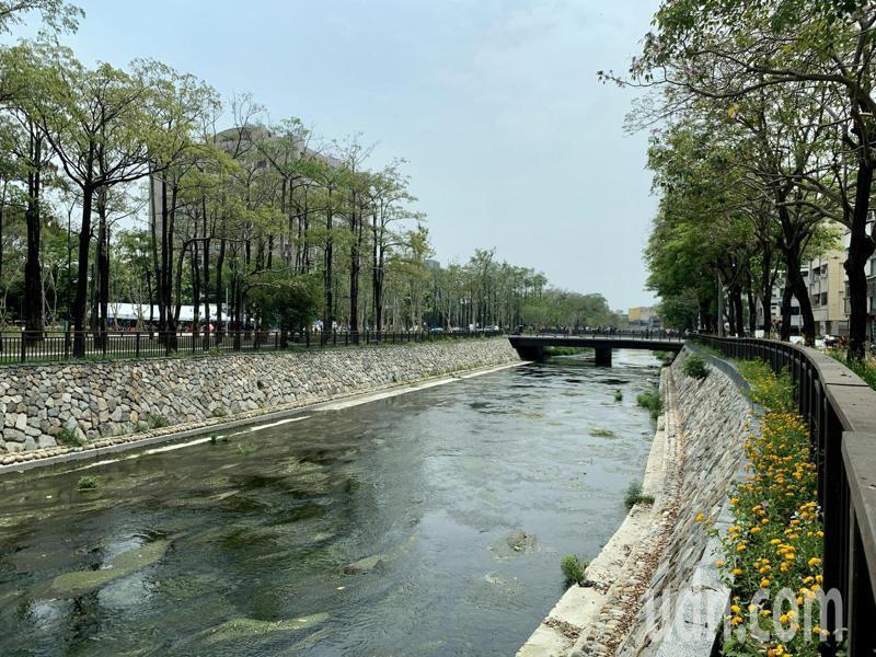 台中綠川「興大段」減少水泥整治,完全開蓋,沒有以水泥封閉河川,能吸引動物棲息。記者喻文玟/攝影