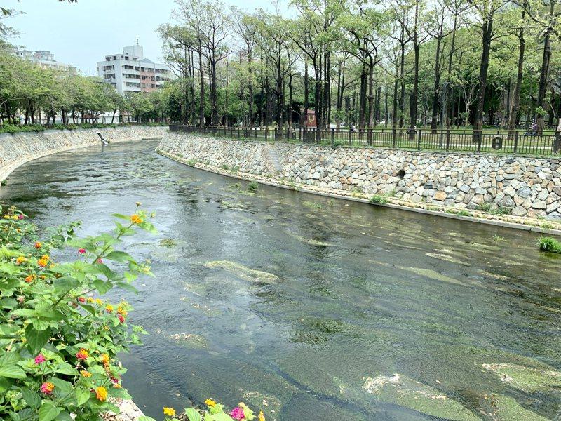台中綠川「興大段」整治減少水泥構造,完全開蓋,藉由汙水截流改善水質,能吸引動物棲息。記者喻文玟/攝影