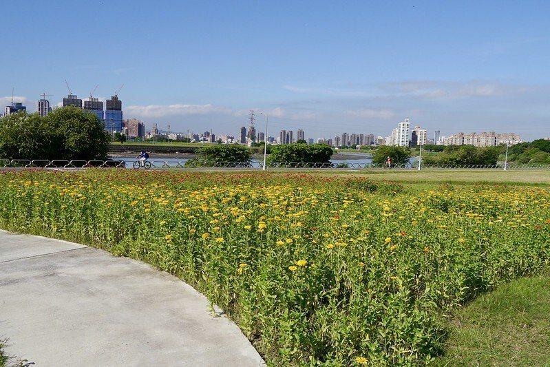 2018花海珍藏影像,amy攝於中正河濱公園。