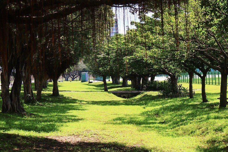 綠色隧道般的榕樹群。