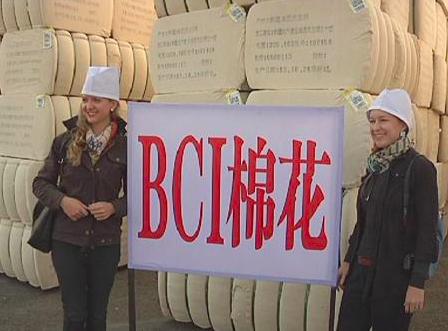 「良好棉花發展協會」(Better Cotton Initiative)的網站,已經刪除其去年發表的抵制新疆棉花聲明。(新浪新聞網)