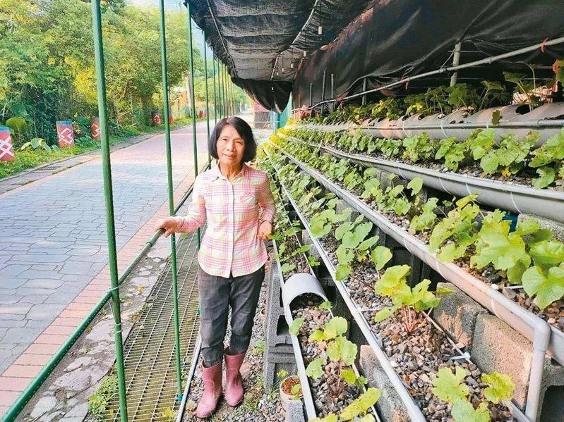 75歲黃美玲14年前從福山國小校長退休,但她退而不休,持續在福山耕作。  圖/...