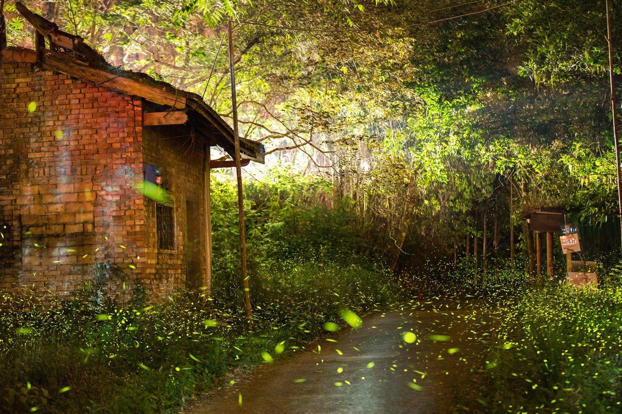 做為魚池鄉著名的蓮華池森林賞螢步道,豐富優良的自然環境,是復育螢火蟲的重要基地。...