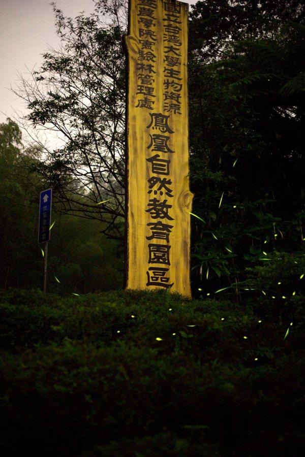台大實驗林鳳凰自然教育園區,也是南投縣重要的賞螢勝地。 圖/陳陽發提供
