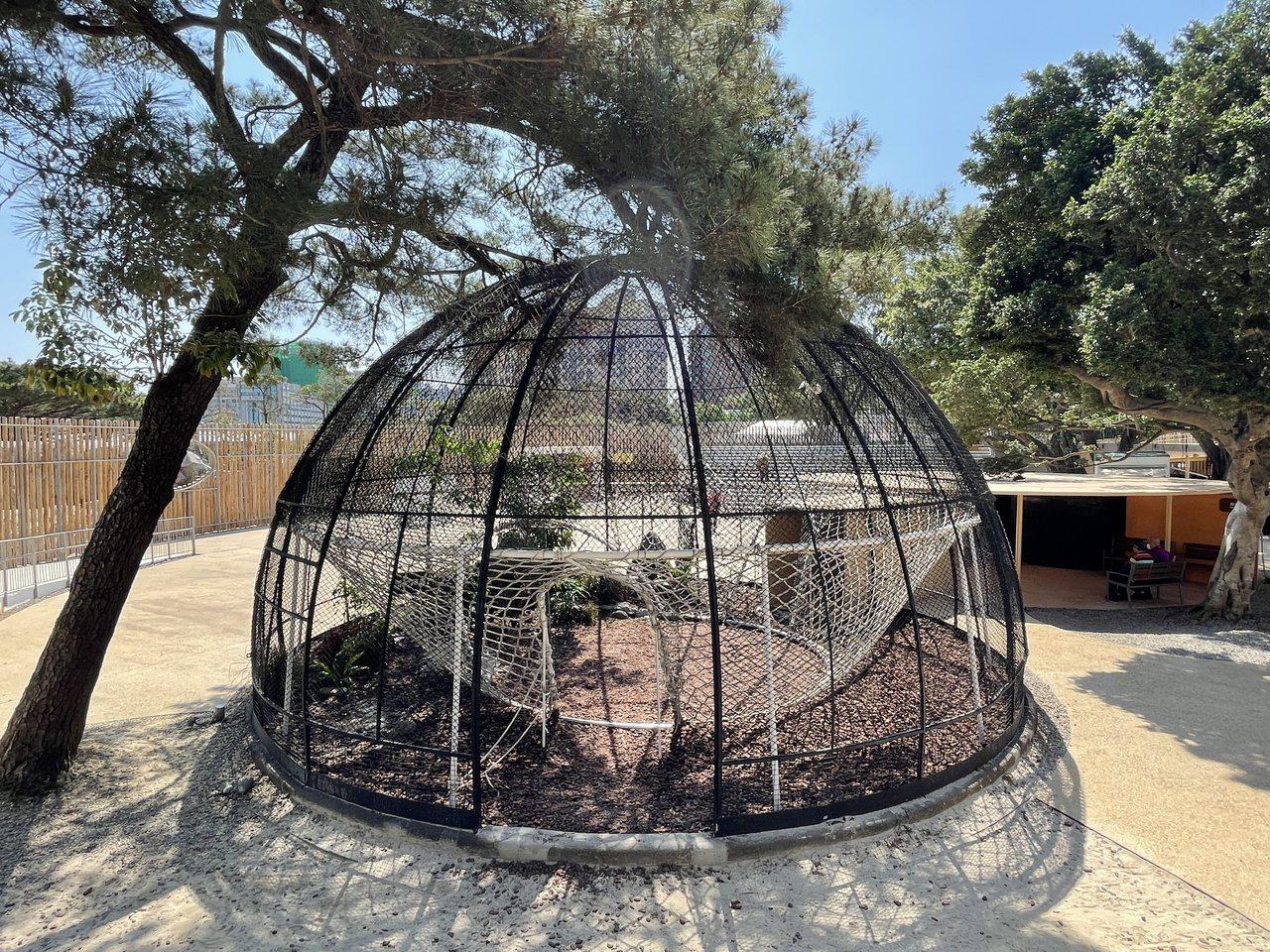 新竹市立動物園核心廣場旁的半球型大鳥籠,過去曾住著蒼鷺、埃及聖䴉、粉紅鵜鶘等鳥禽...