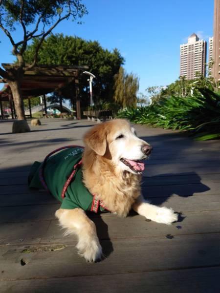 小笨在公園
