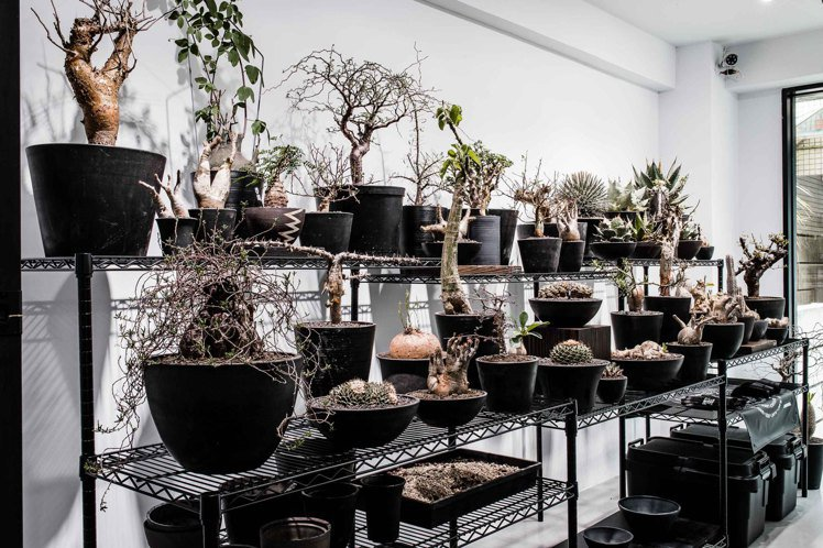 植物品牌0343 CONSERVATORY利用了SRL系列花器,栽種各式珍稀塊根...