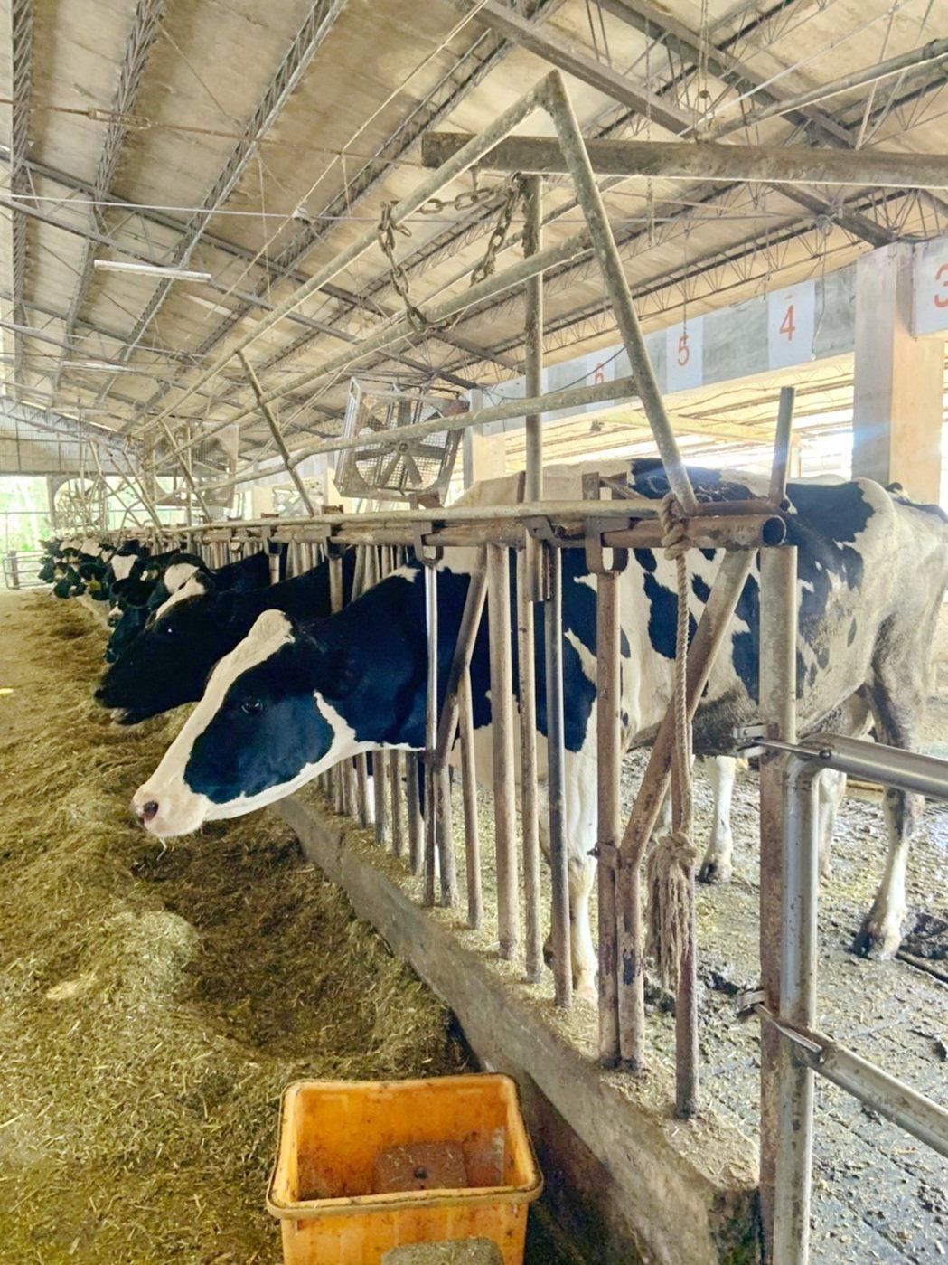 嘉義市唯一「牧場」,嘉義大學動物試驗場。記者卜敏正/翻攝