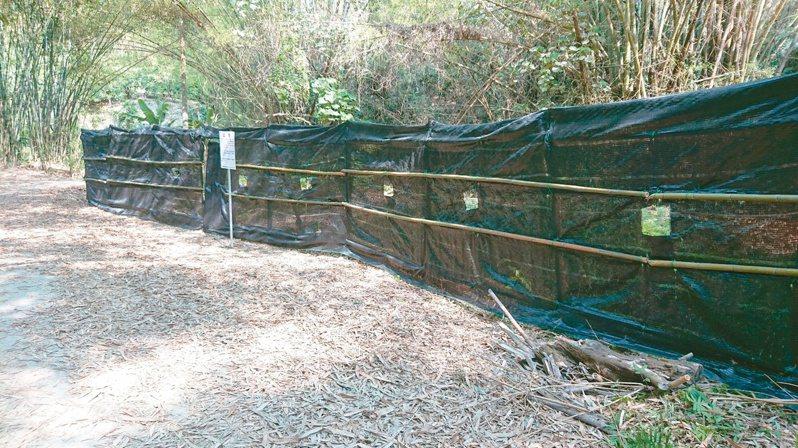 台南六甲保安林有八色鳥築巢,嘉義林管處架隔離網,網上設有賞鳥窗供觀察。圖/嘉義林管處提供