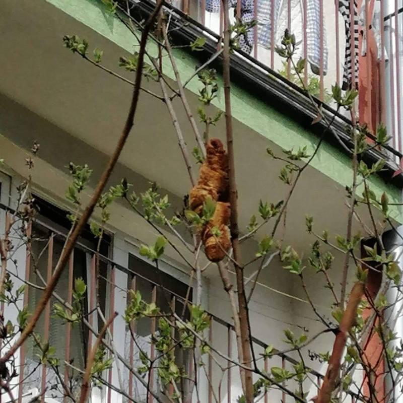 波蘭有女子發現窗外有「棕色生物」,說大廈的人都嚇得關起窗。圖/取自臉書