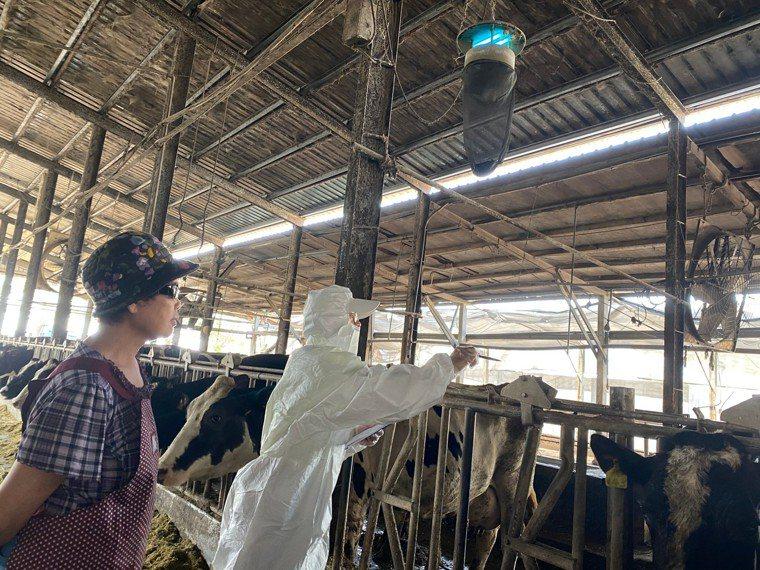 台南市動保處加強牧場的消毒及稽查,呼籲民眾安心,牛肉及牛乳都可以安心食用。圖/動...