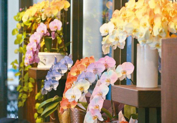 世茂農業生技是專業生產高品質蝴蝶蘭切花之農業公司,擁有獨特染色花技術,外銷營收比...