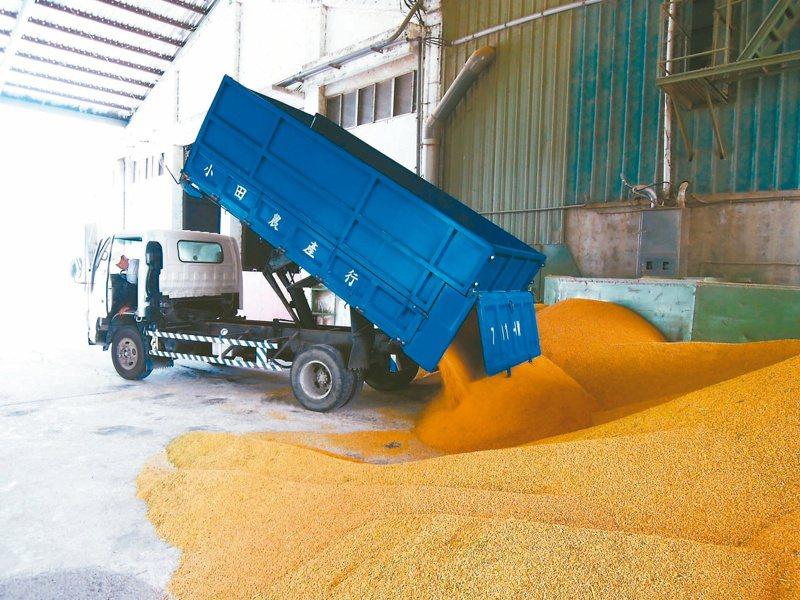 庫存,一年比一年多 近五年公糧收購年年超收,稻米生產過剩,銷售量卻未達標,甚至還得另編列預算保存與去化公糧。本報資料照片