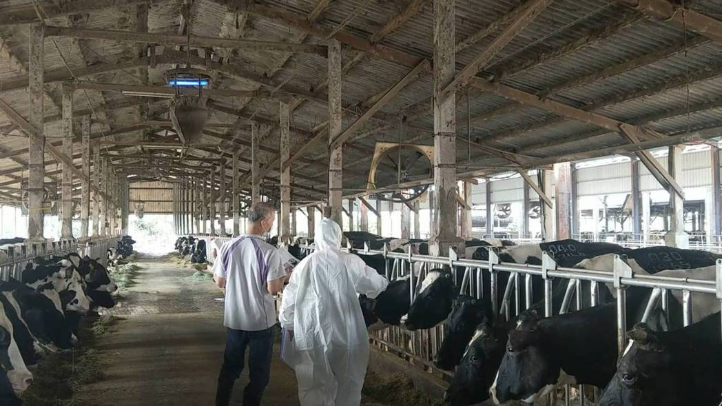南市提前完成牛結節疹疫情調查,未發現疫情。圖/台南市動保處提供