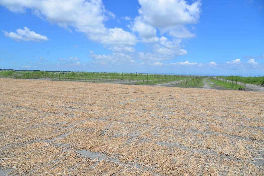 雲林縣環保局推廣稻草再利用,將其鋪設在裸露地及濁水溪河床,明顯抑制揚塵及PM2....