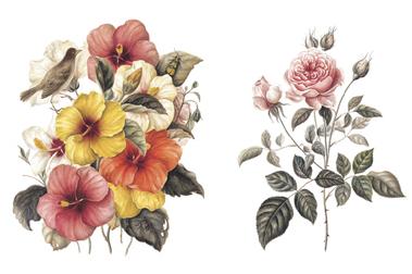 花的美麗,她只是吿訴你——《植物情人》,台灣第一本水彩古典植物畫