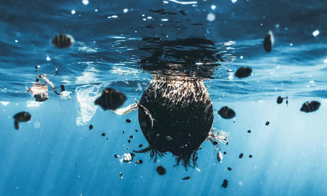 比起涉及保鮮、衛生的食品包裝,吸管是海洋垃圾中最容易捨棄不用的。 圖/unspl...