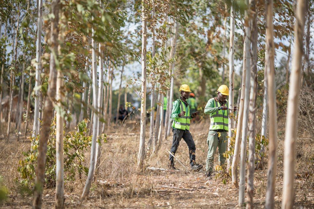 蘋果與保護國際基金會及肯亞一間名為Komaza的可永續發展的「微林業」公司合作,...